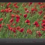 kalender2013_w_fin__seite_06