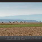 kalender2013_w_fin__seite_11